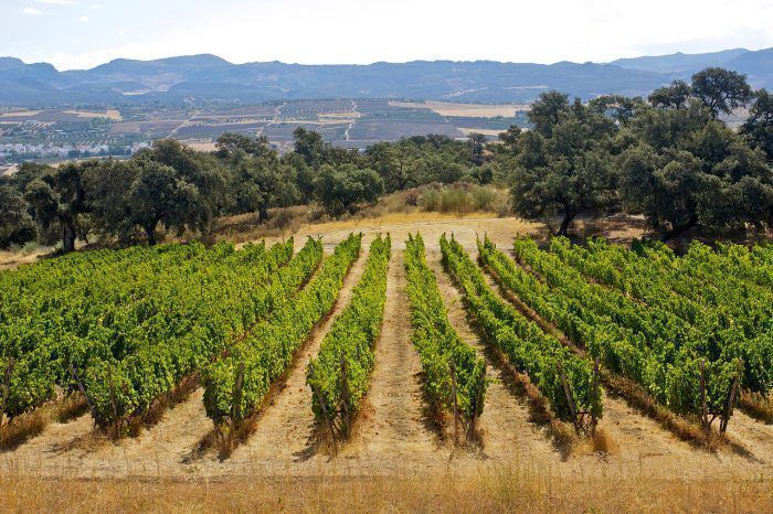 Winery Tour with Tapas and Ronda City Tour