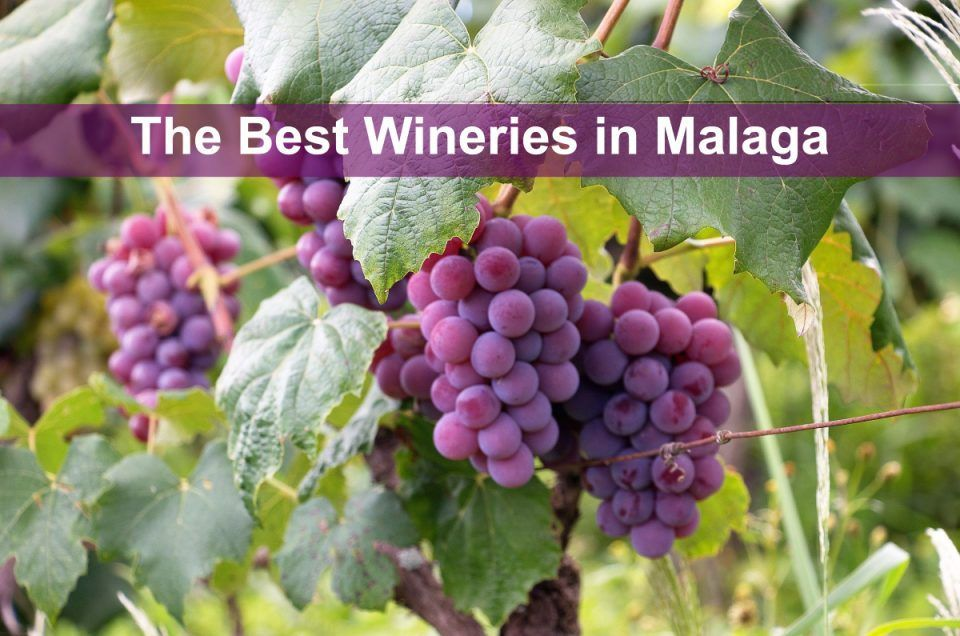 The best wineries in Malaga
